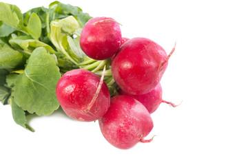 radish on white background