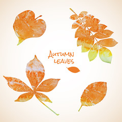 Colorful set of watercolor leaves
