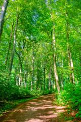 Fototapete - Waldweg im Sonnenschein