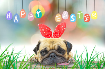 Happy Easter. A young cute dog puppy Pug wearing Easter rabbit Bunny ears sitting next to a pastel colorful of eggs.