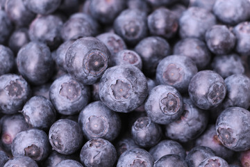Fresh ripe blueberries