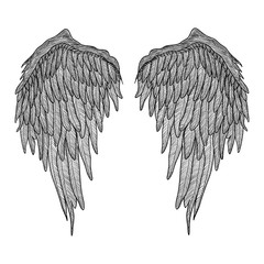 Angel wings. Black and white realistic illustration. Tattoo