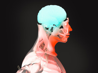 Human anatomy 3D futuristic technology scan.Head cross section showing brain. Vibrant colors. Biological information. Sci-fi
