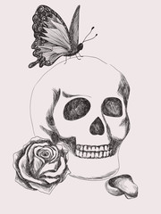 Skull, rose and butterfly. Gothic black and white Illustration