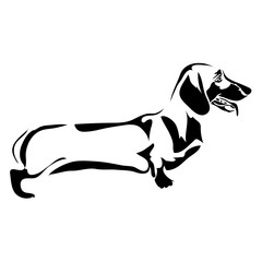Outline dog Dachshund vector illustration. Can be use for logo