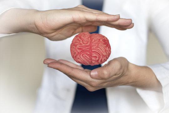 cerebro neuromanagement en la empresa