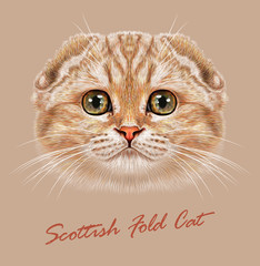 Vector Illustrative Portrait of Scottish Fold Cat