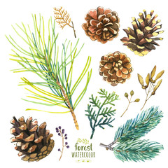 Watercolor illustration with branches, berries and cones.