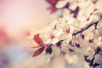 Blossom of the tree as the sign of spring time