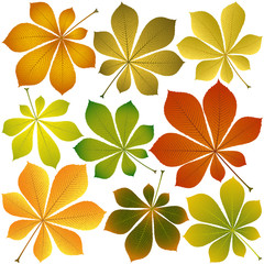 Wall Mural - autumn chestnut leaves isolated on white background