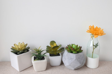 Variety of Succulent in pots and orange  flower in glass bottle,