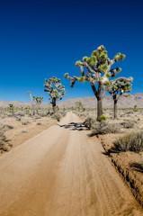 Fototapete - Sandy Desert Road with Joshua Trees
