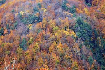 Mille colori del bosco