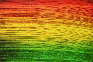 Green red yellow wood background Reggae style