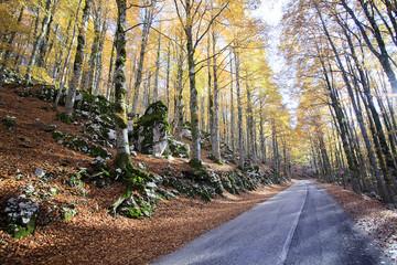 Strada nel bosco autunnale