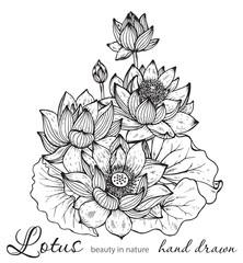 Beautiful monochrome vector floral bouquet of lotus flowers