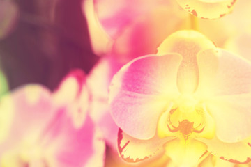 Orchid in rainbow tone
