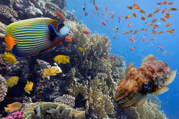 Coral landscape.Red Sea, Egypt