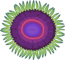 Zoanthus