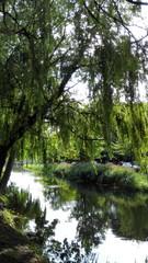 Greenery around canal in Dublin