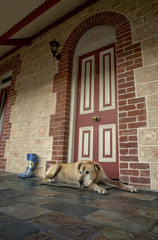 Large dog resting on the door mat of a beautiful old stone and brick house.