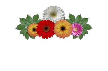 Multicolored flowers daisies with green ivy leaves on a white background