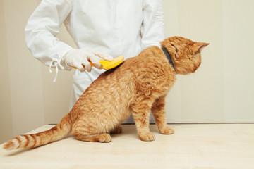 Vet combs cat