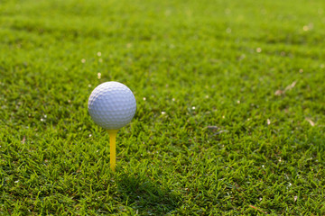 Golf ball in tee on grass green
