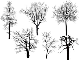 six bare isolated tree silhouettes