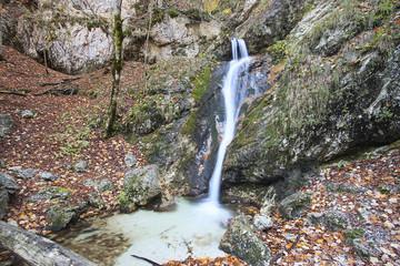 Piccola cascata tra le foglie del bosco