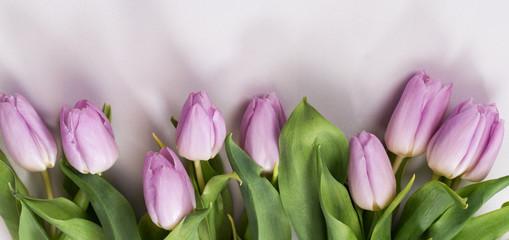 Fototapeta Wiosenny pastelowy bukiet liliowych tulipanów na białym tle  obraz