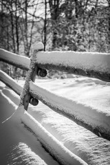 Fence and tree covered with snow