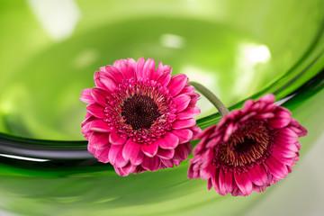 Różowe gerbery w zielonej misie ze szkła