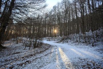 Alba nel bosco con poca neve
