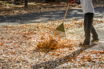 Man cleaning leaves in autumn season .