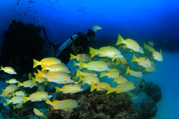 Fish, coral reef and scuba diver