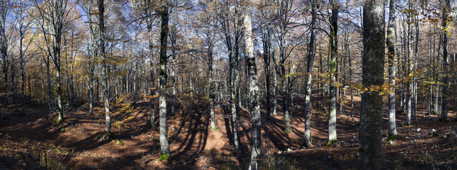 Panoramica del bosco