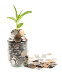 Coins and plant in glass on white background
