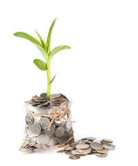 plant and coins in plastic bags on white background, investment