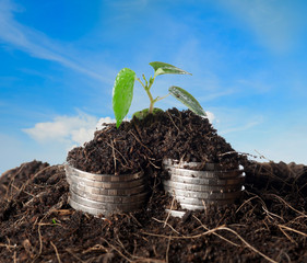 coins in soil with young plant and blue sky