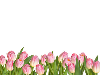 Blossoming tulips decorative border. EPS 10