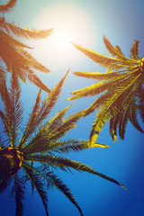 Tree palms and sunshine