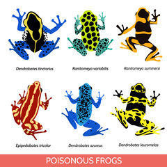 Set of different poisonous frogs, flat design. Vector illustration of poisonous frogs on a white background.Set of isolated frogs.  Frog water and frog tree. Dyeing dart frog. Blue poison dart frog