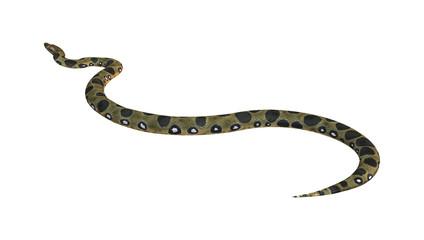 Green Anaconda on White