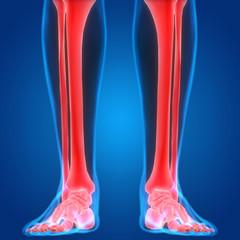 Human Body Bone Pains (Leg Joints)