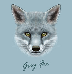 Vector Illustrative portrait of Grey Fox