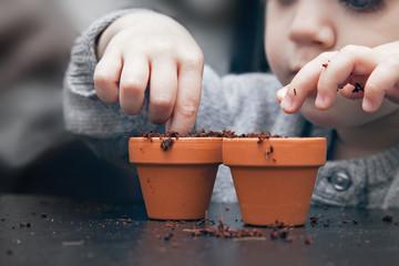 Fototapeta Child planting seeds in pots obraz