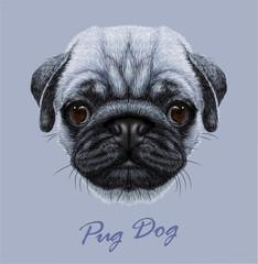 Vector Illustrative Portrait of Pug Dog