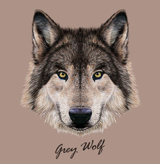 Digital vector Illustration Portrait of a Wolf.