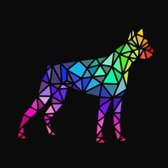 polygon boxer dog, colorful. Dark background